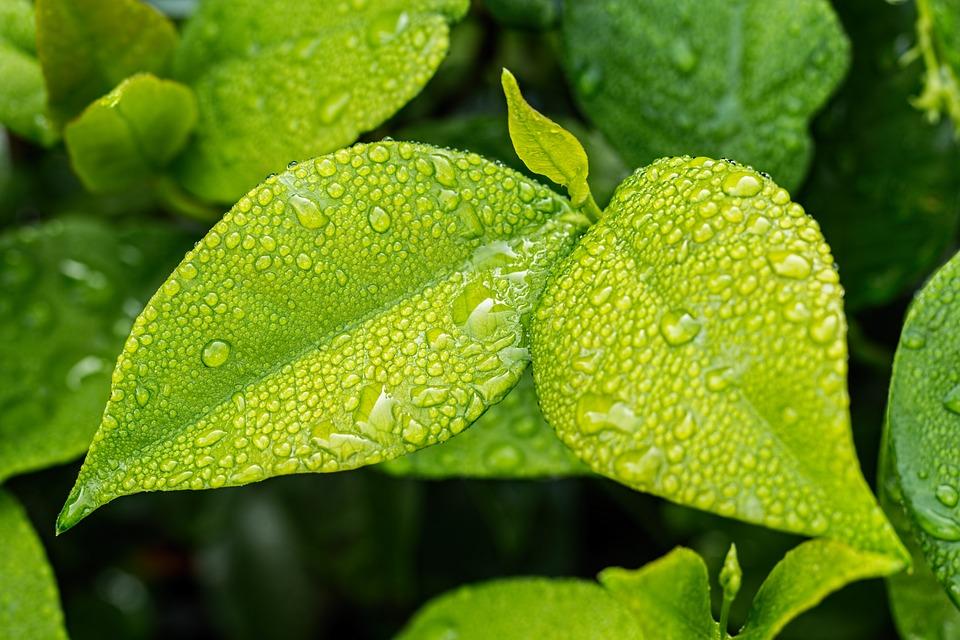 Leaf, Green, Foliage, Green Leaves, Green Leaf, Nature