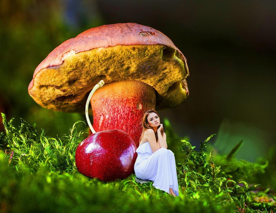 Fall, Nature, Fruit, Food, Flora, Outdoors, Season