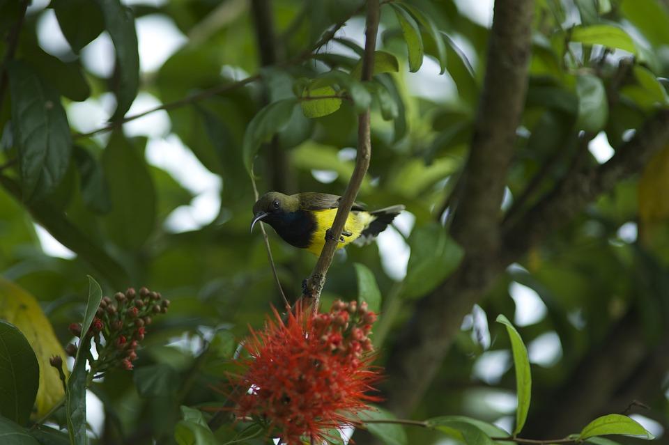 Birds Eat Retail Linden, Birds, Food, Nature, Songbird