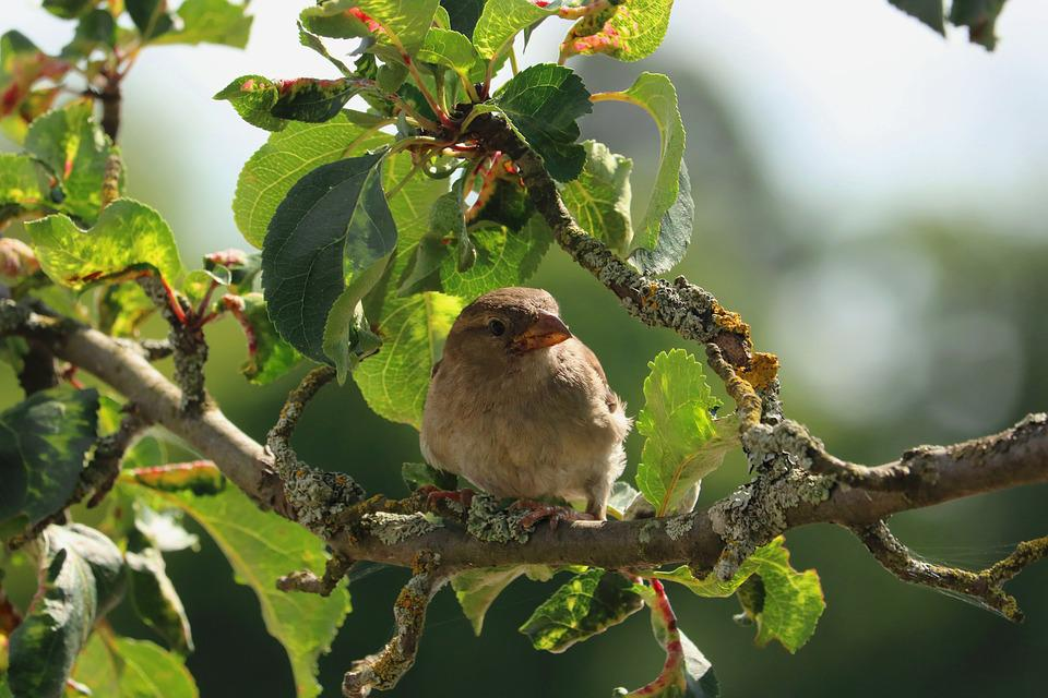 Bird, Road, Sparrow, Nature, Wild, Tree, Foraging