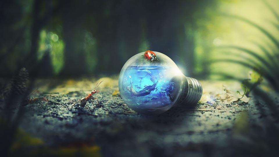 Nature, Outdoors, Ants, Forest, Light Bulb, Light