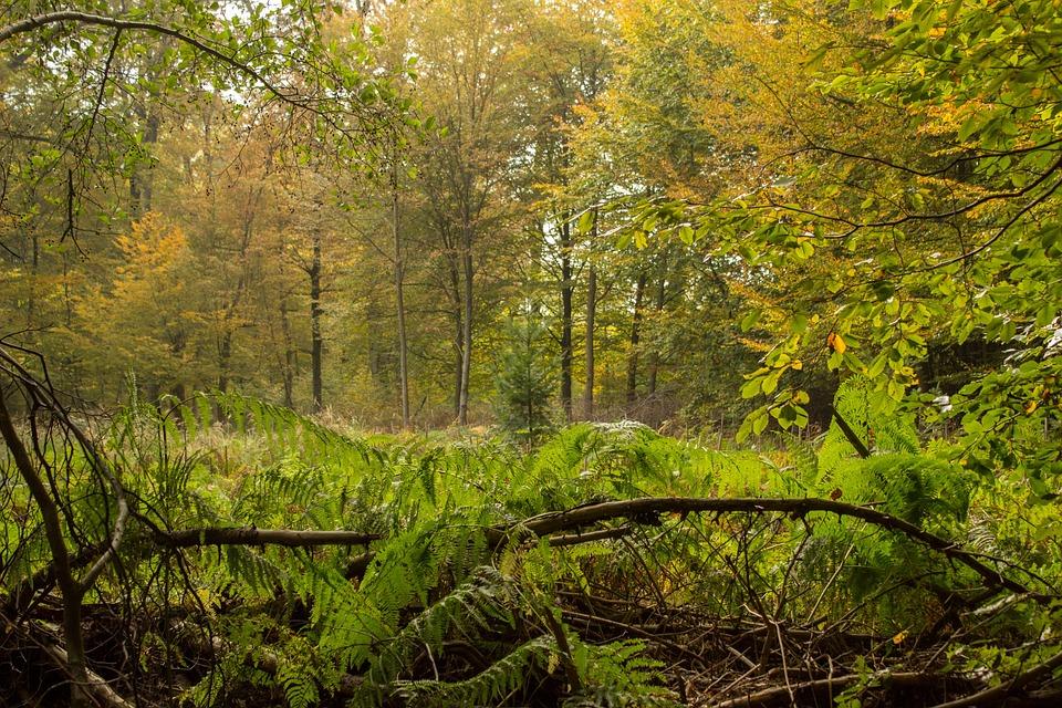 Autumn, Forest, Leaves, Nature, Trees, Mood, Landscape