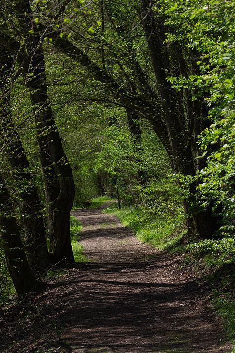 Away, Trees, Nature, Forest, Path, Landscape, Avenue