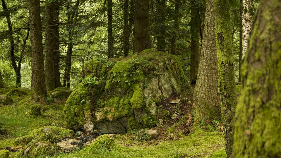 Forest, Moss, Boulder, Nature, Green, Tree, Natural