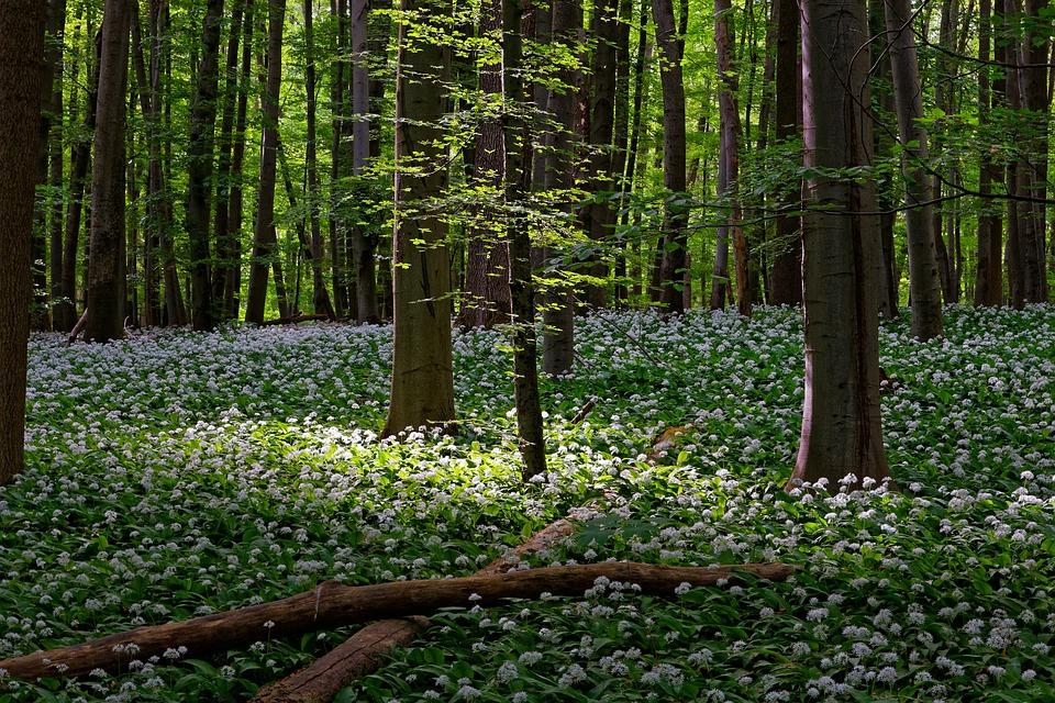 Landscape, Nature, Forest, National Park, Hainich