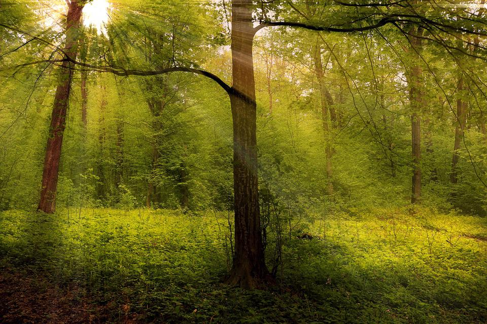 Forest, Woods, Rays, Nature, Landscape