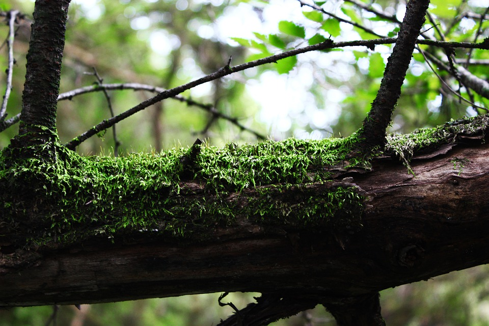 Wood, Moss, Green, Nature, Leaves, Forest