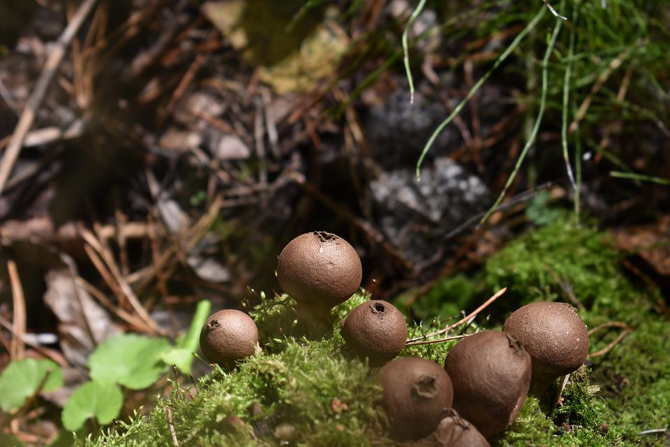 Mushrooms, Toadstools, Fungi, Moss, Nature, Forest
