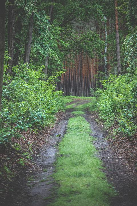 Forest, Tree, Nature, Trees, Landscape, Light, Path
