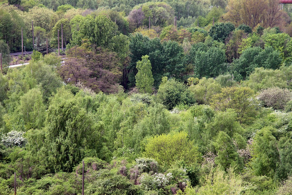 Forest, Nature, Atmosphere, Mood, Tree, Trees, Green
