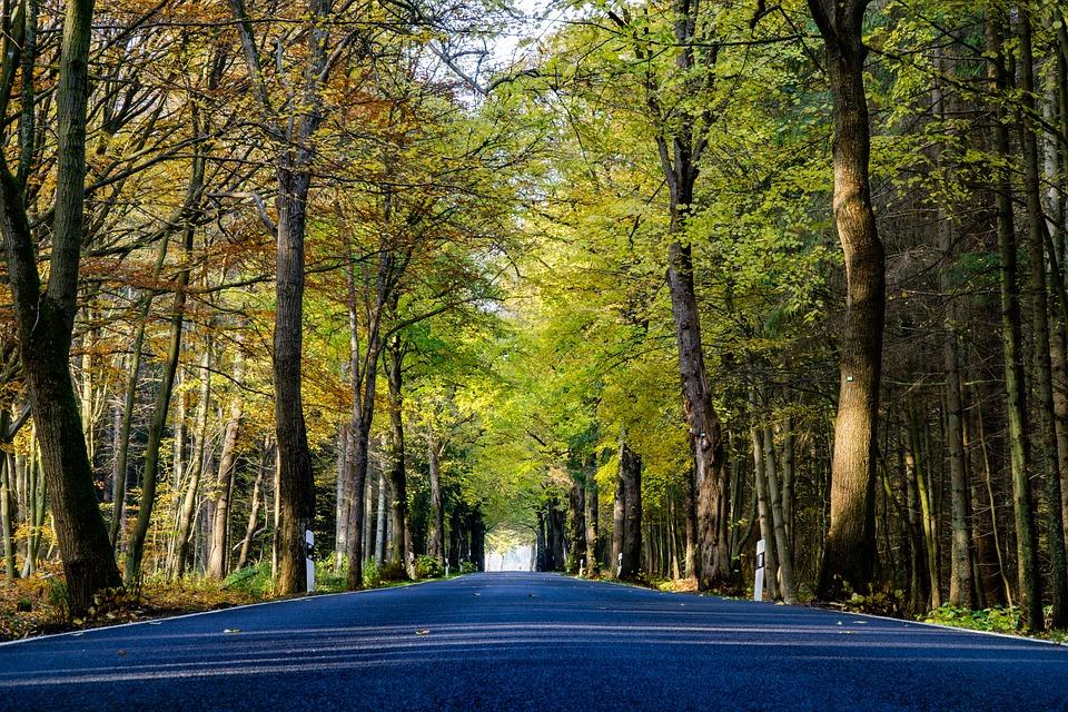 Autumn, Road, Landscape, Forest, Nature, Avenue, Trees