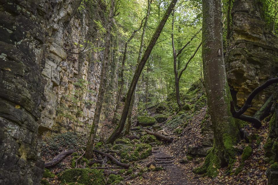 Forest, Nature, Landscape, Trees, Secret, Away, Green