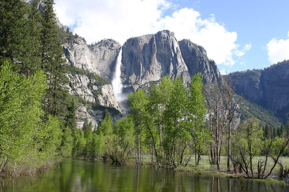 Yosemite, Forest, Nature, Trees, Tree, Landscape