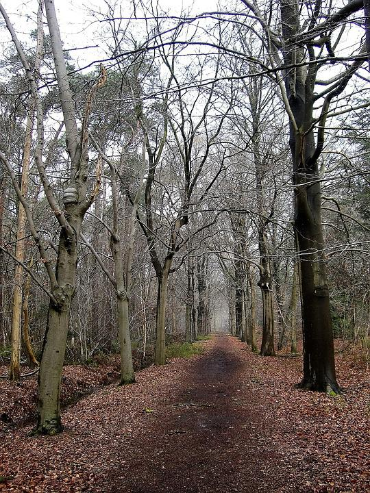 Nature, Forest, Forest Path, Winter