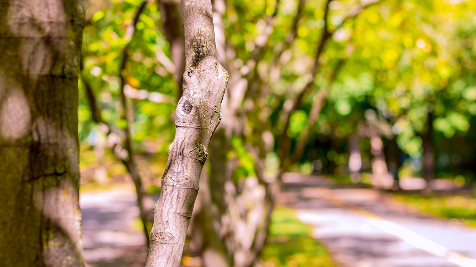 Tree, Nature, Landscape, Forest, Green, Wood, Autumn