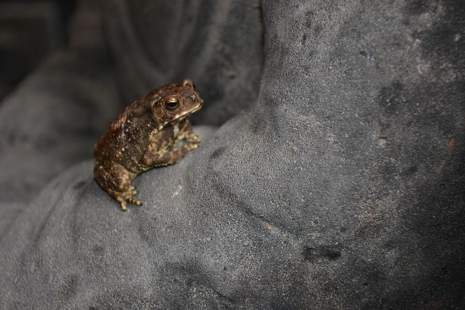 Frog, Nature