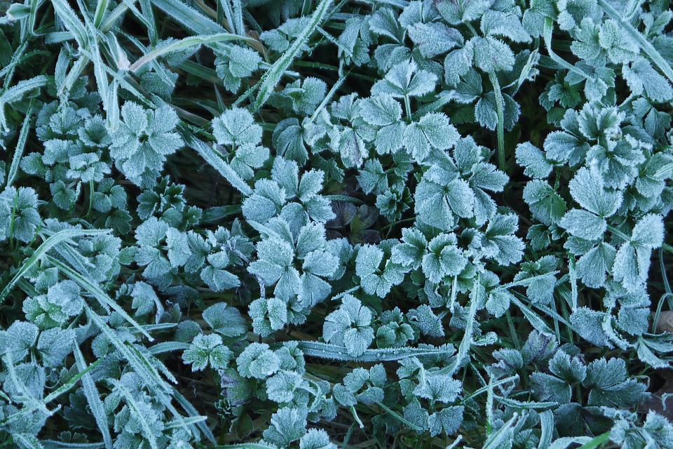 Grass, Frost, Icy, Nature, Cold, Winter, Green
