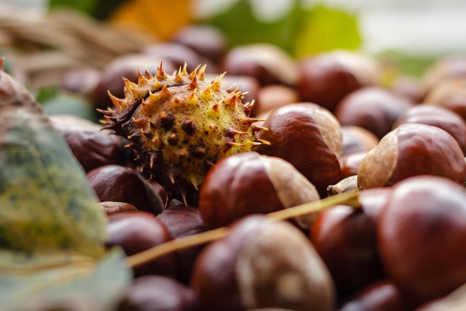 Castanea, Chestnut, Fruit, Autumn, Nature, Shiny, Brown