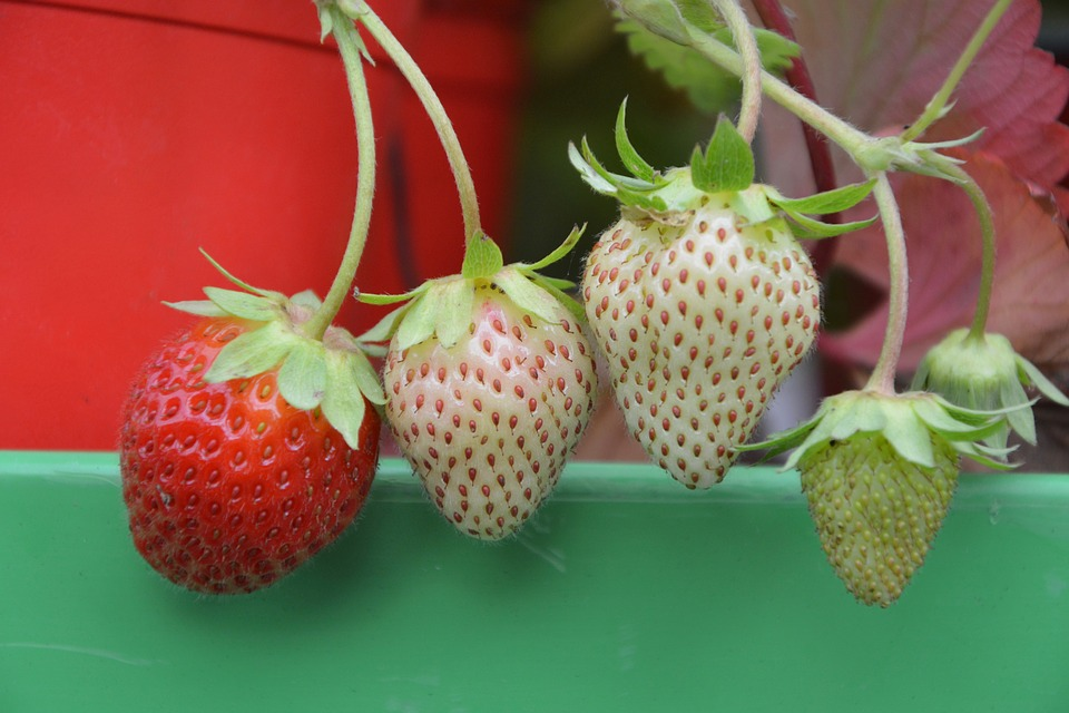 Strawberry, Red, Green, Fruit, Summer, Nature
