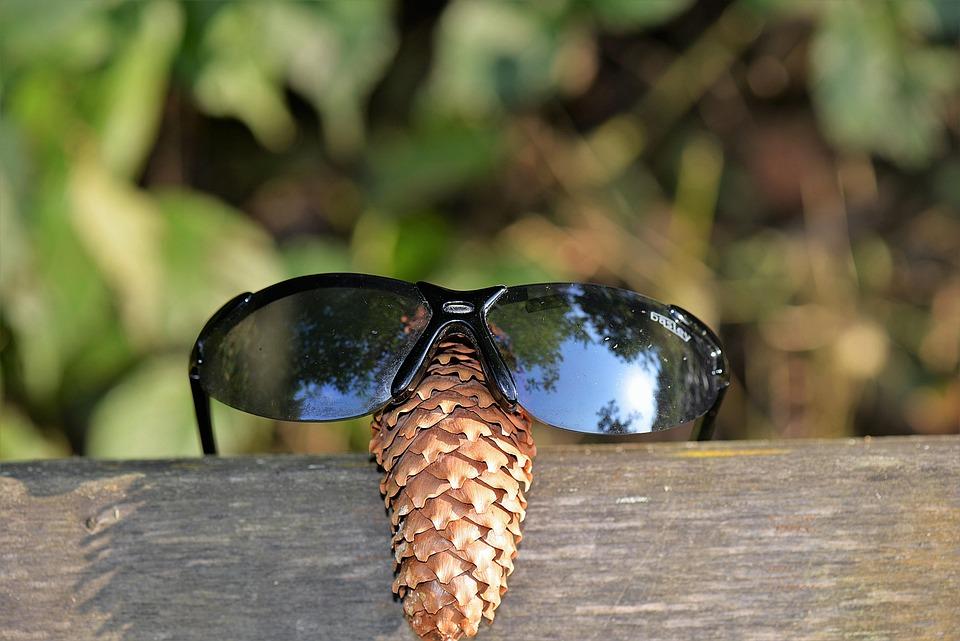 Sunglasses, Tap, Funny, Close, Nature, Fun