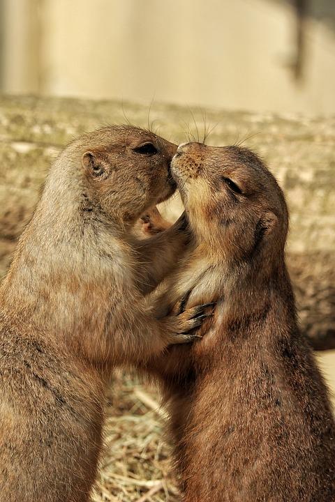 Mammal, Nature, Animal, Animal World, Cute, Fur