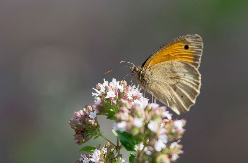 Butterfly, Garden, Color, Summer, Insect, Nature
