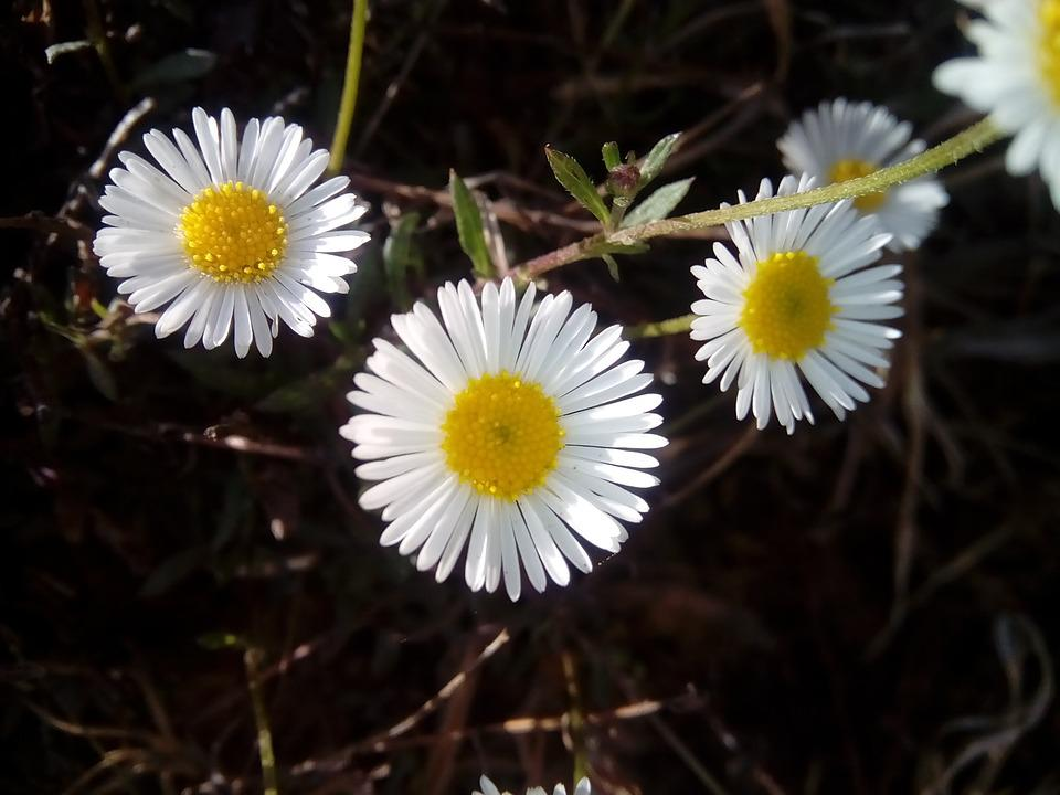 Nature, Flora, Flower, Closeup, Garden