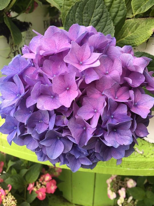 Flower, Plant, Garden, Nature