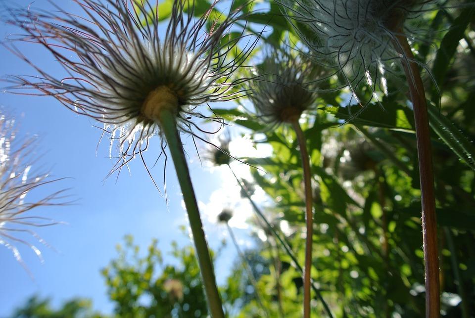 Flowers, Summer, Nature, Plant, Garden, Green