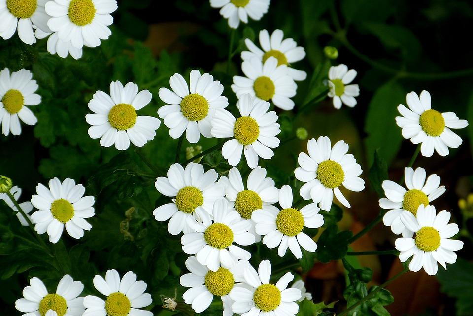 Flowers, Garden, Plant, Flora, Nature, White, Green