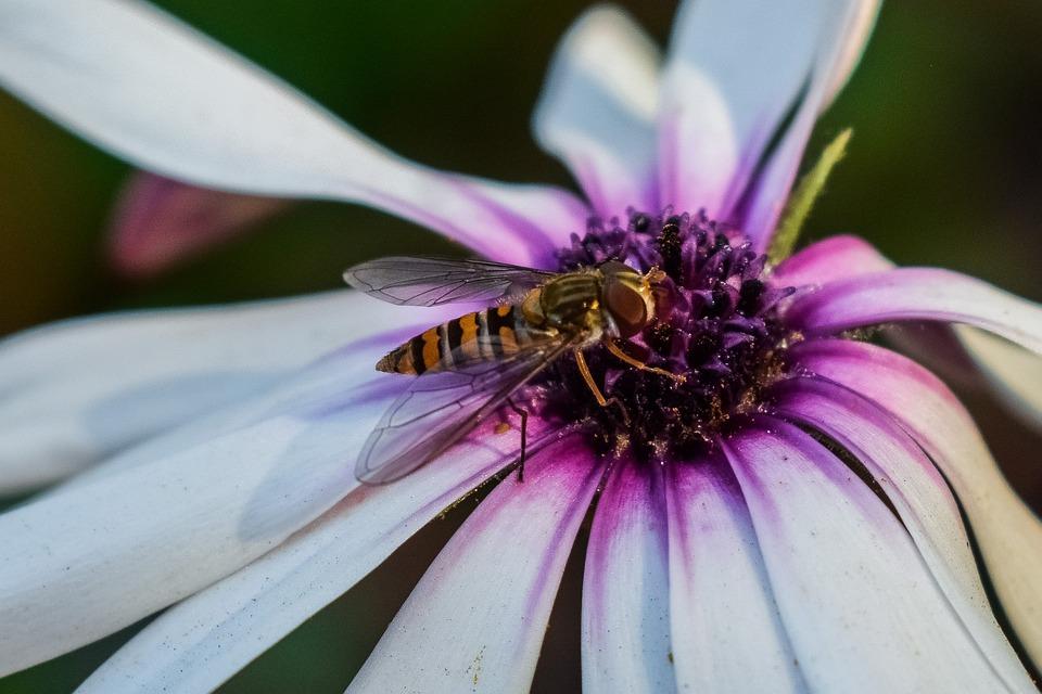 Flower, Nature, Flora, Insect, Garden, Closeup, Spring