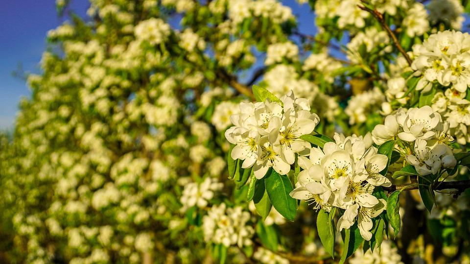 Flower, Plant, Nature, Garden, Leaf, Tree, Flowering