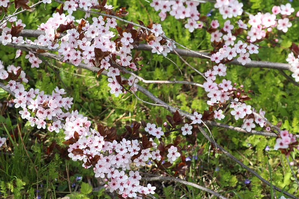 Nature, Spring, Tree, Flowers, Pink, Garden