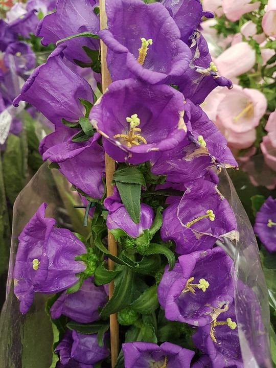Nature, Flowers, Garden, Plant