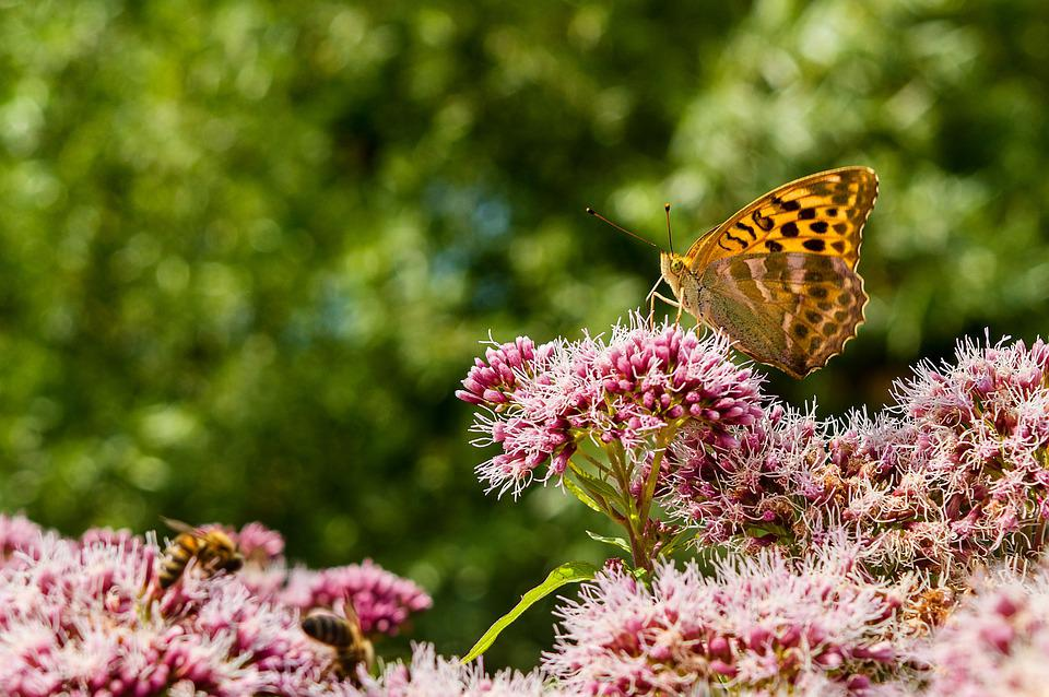 Butterfly, Flowers, Nature, Insects, Garden, Purple