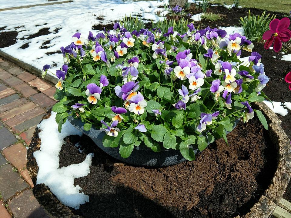 Flower, Garden, Nature, Flora, Leaf, Season, Purple