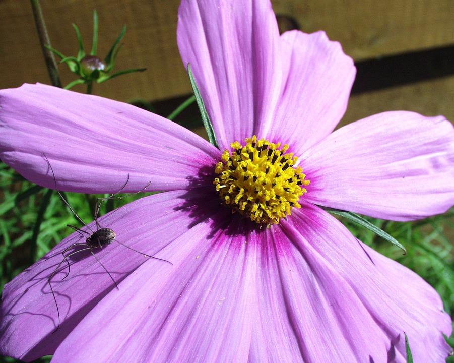 Spider, Purple, Flower, Close-up, Macro, Nature, Garden