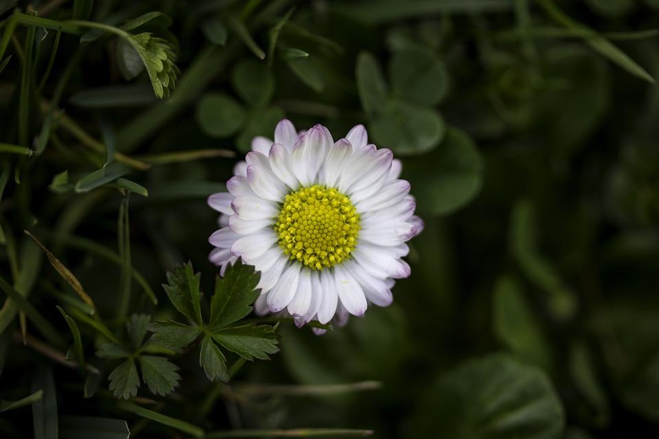 Nature, Flora, Flower, Summer, Garden