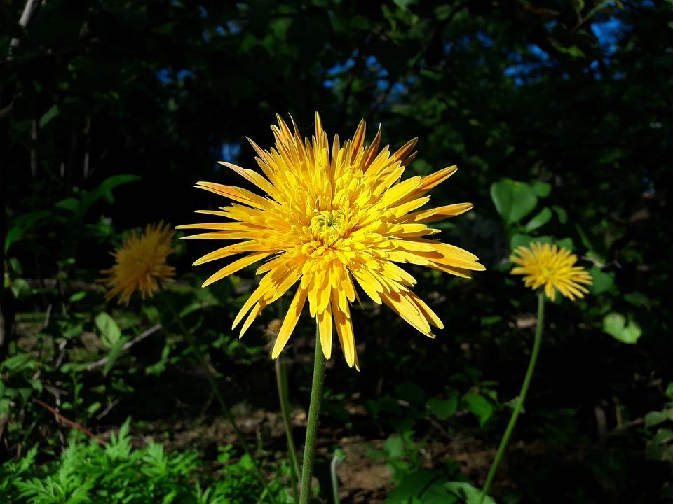 Nature, Flora, Summer, Flower, Outdoors, Garden