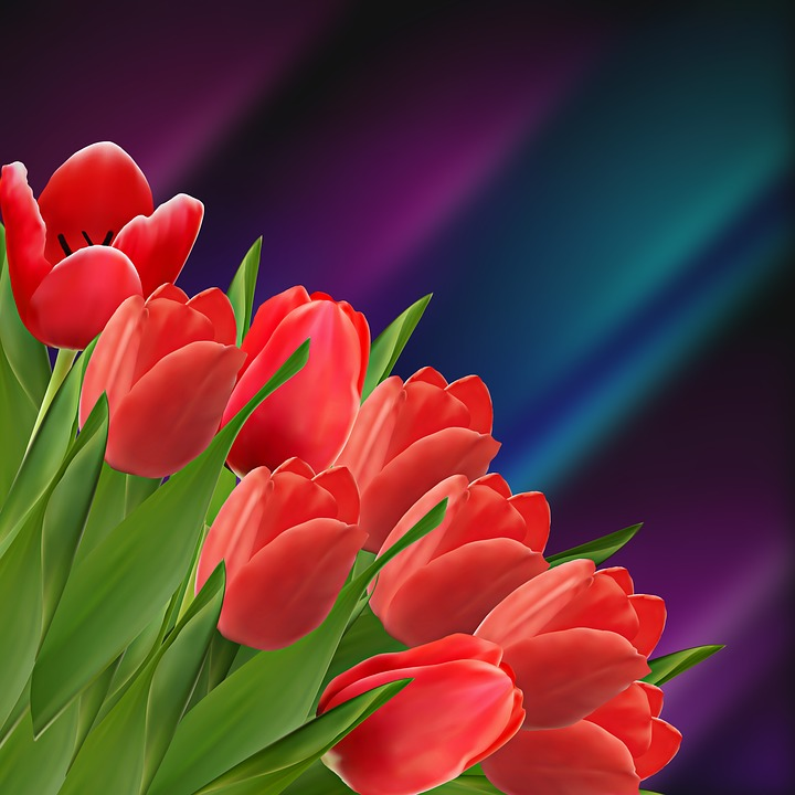 Nature, Garden, Flower, Plant, Tulip, Tulips, Red Tulip