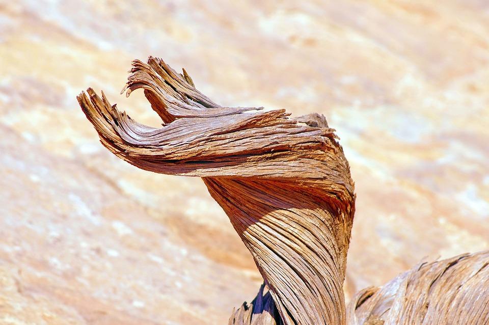 Gnarled Utah Juniper Trunk, Gnarled, Wood, Tree, Nature