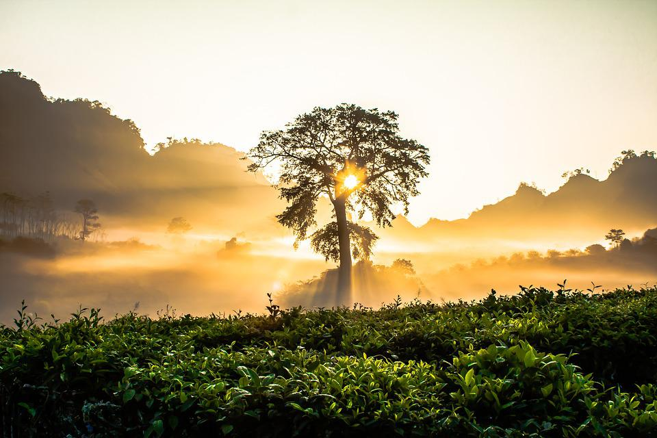 Dawn, Gold, Bright, Tree, The Morning, Nice, Nature