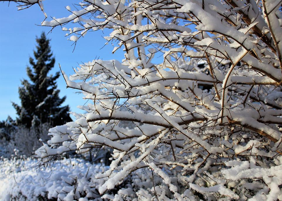 Winter, Gran, Christmas Tree, Snow, Landscapes, Nature