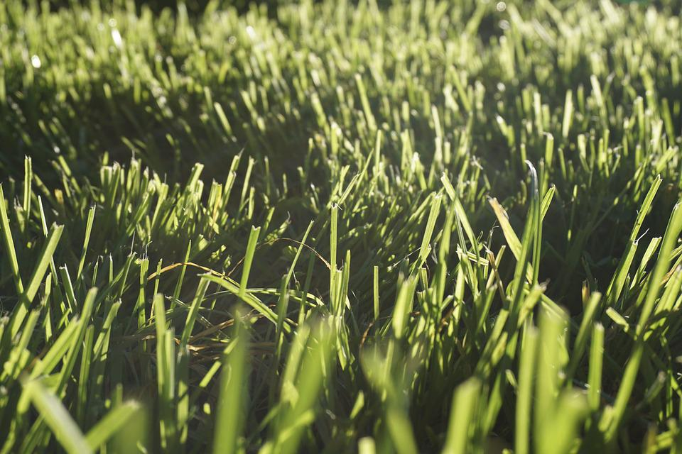 Grass, Blades Of Grass, Meadow, Halme, Nature, Green