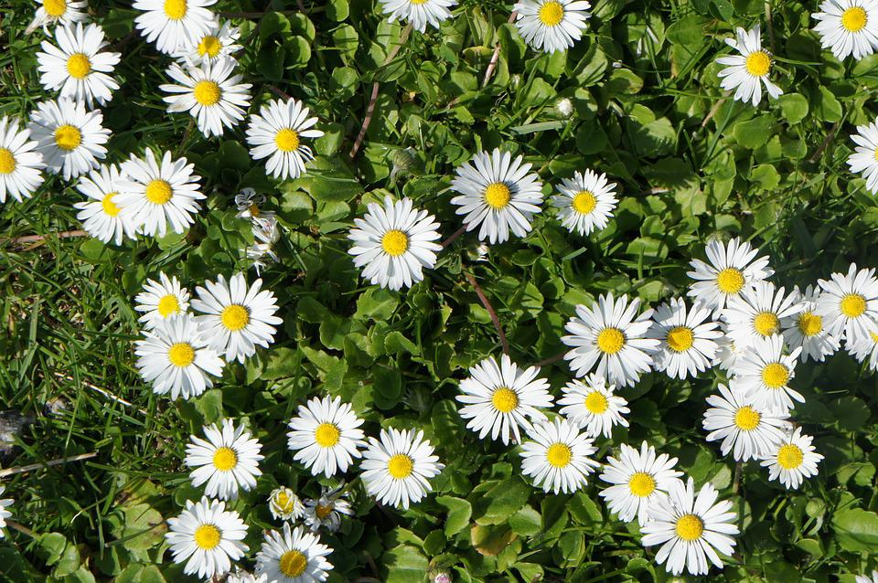 Free photo nature grass flowers white flowers summer white max pixel flowers white grass summer nature white flowers mightylinksfo