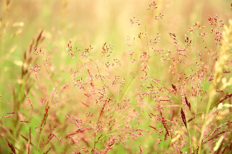 Prairie, Grassland, Grass, Nature, Field, Meadow
