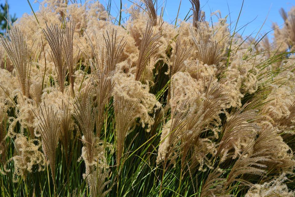 Grass, Weeds, Outdoor, Tall Grass, Tall, Green, Nature