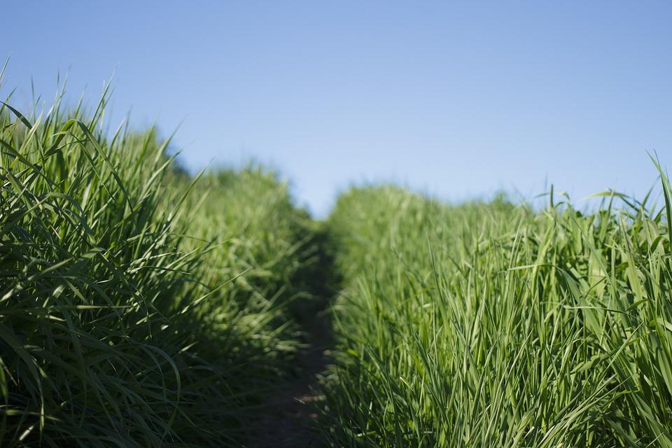 Nature, Grasslands, Grass, Road, Path, Sky, Green