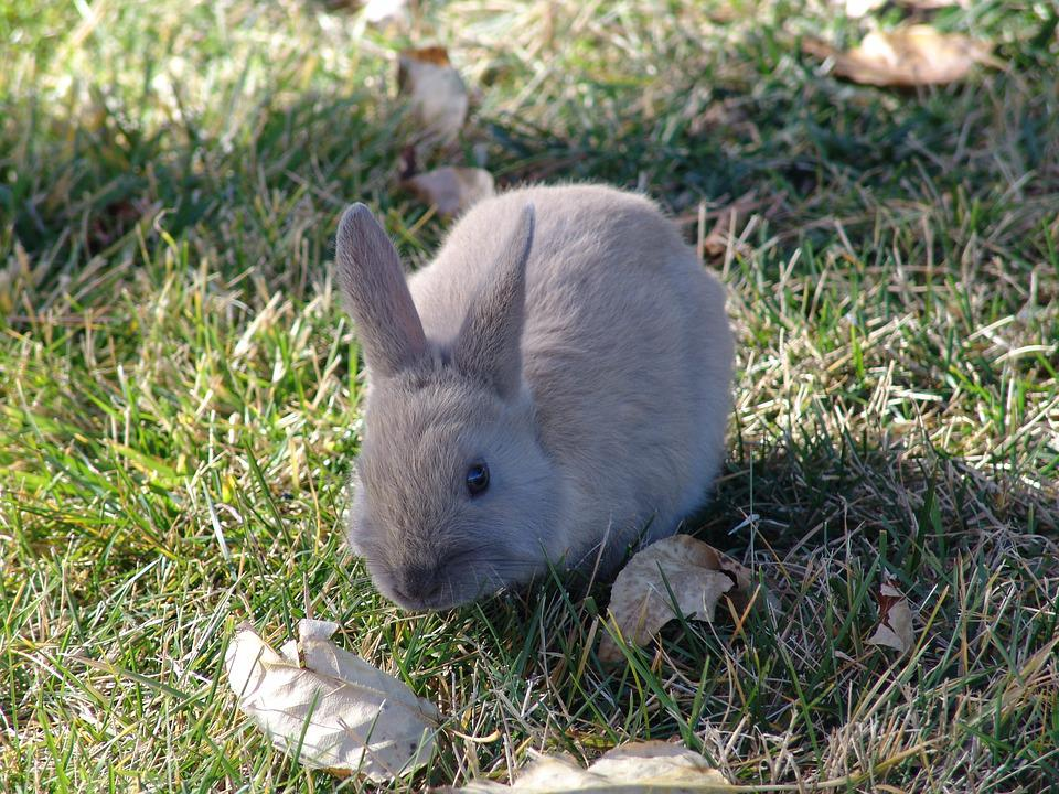Grass, Animal, Nature, Cute, Wildlife, Rabbit