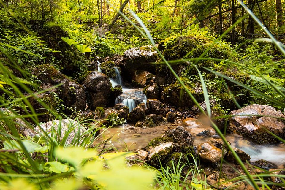 Forest, Rocks, Stream, Grass, Nature, Cascades, River